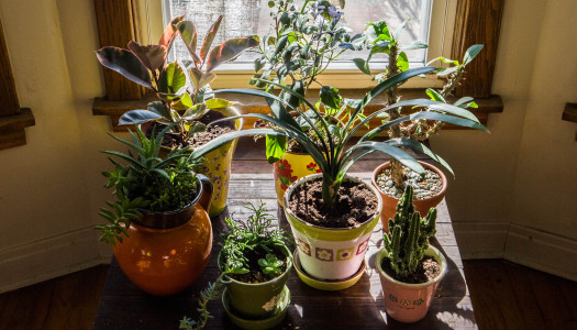 Get Clean Air at Home While Making it Beautiful