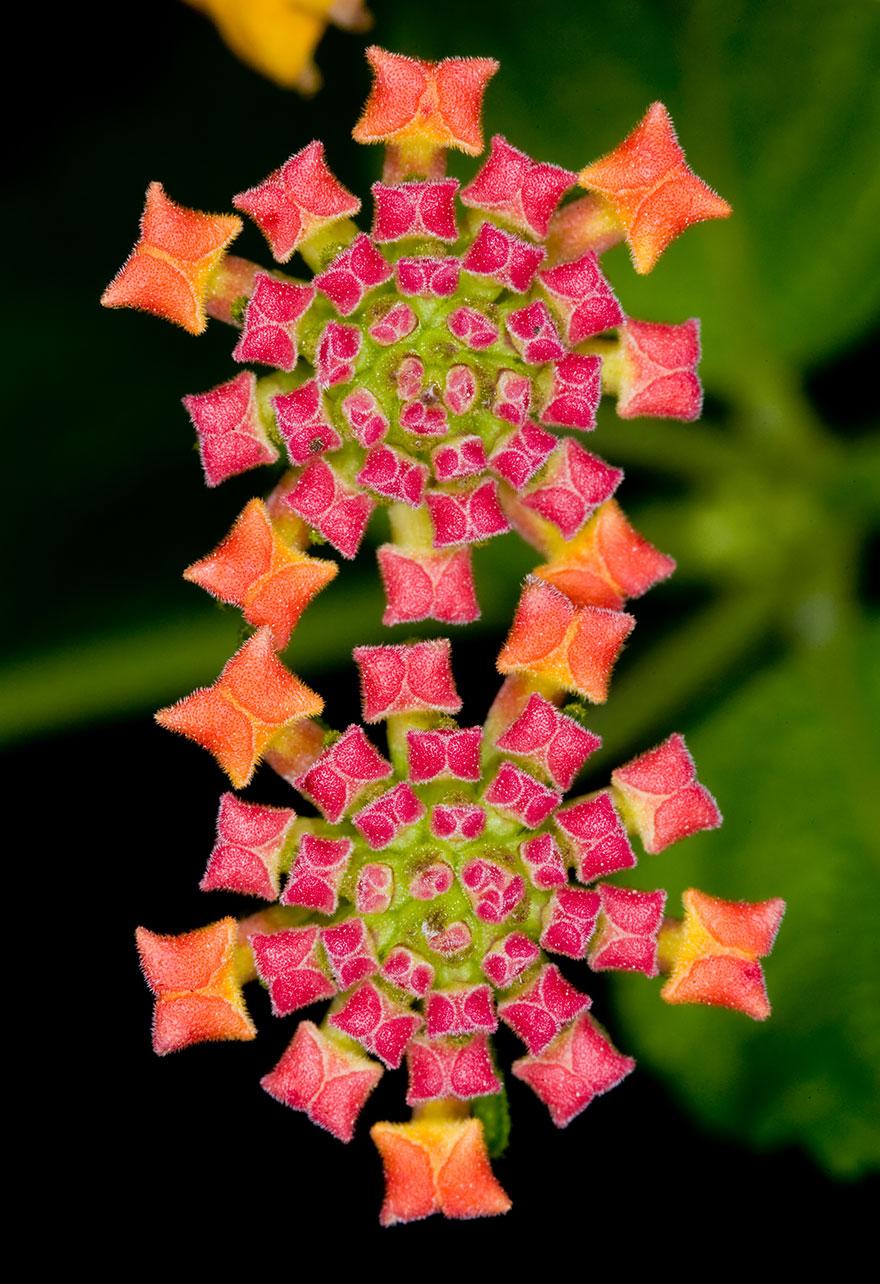 SacredGeometry_Flowers Like Jeweled Carpet