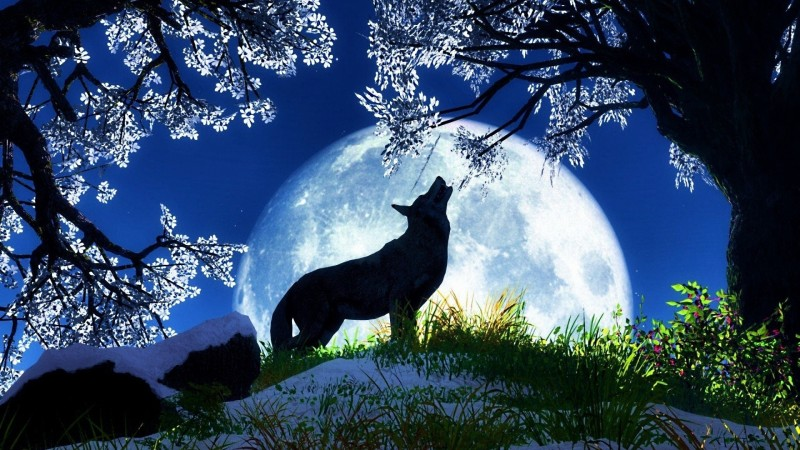 The Wolf Moon In January snow gathers deep in the woods and the howling of wolves can be heard echoing in the cold still air. Some tribes called this moon the Snow Moon, but most often it was used for the next month.