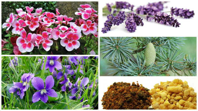 Intuition Aromatherapy Potion Ingredients