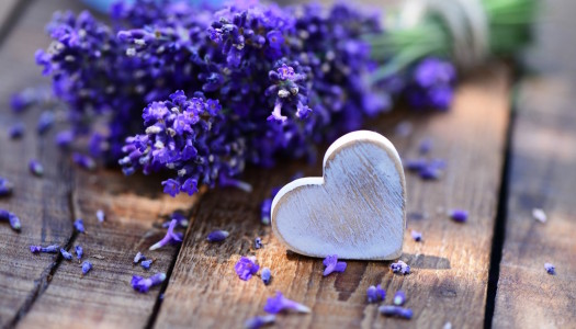 Healing and Loving Life With Aromatherapy – Lavender