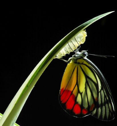everything_soulful_August_horoscope_butter_to_caterpillar