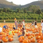 Pumpkin_Patch2e