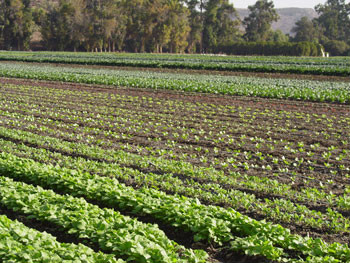 Moorpark Fields Underwood Farms