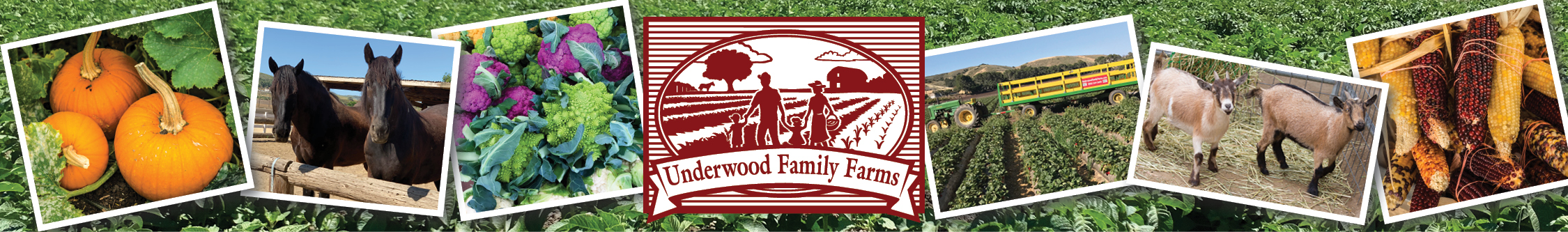Underwood Family Farms - Thanksgiving Shopping
