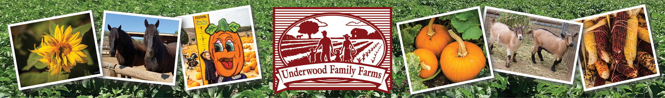 Underwood Family Farms Fall Harvest 2020