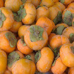 vpersimmons211