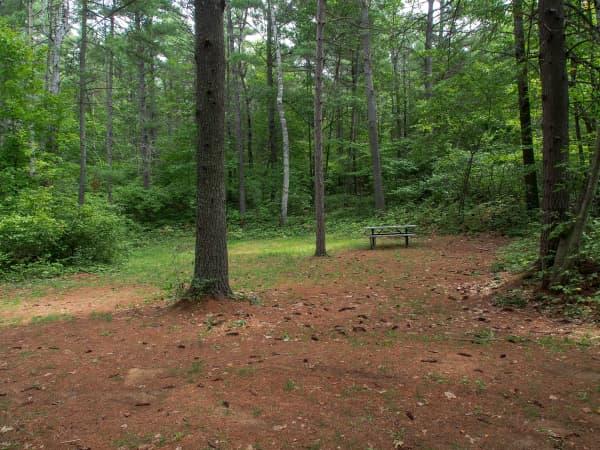 quiet campsite in the woods