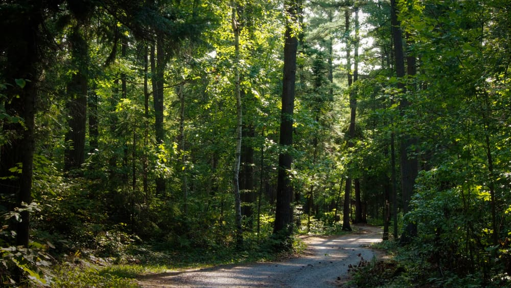 the main road through the best campground in Ontario Canada
