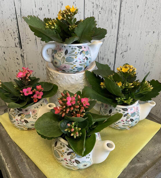 An image of yellow and pink flowers planted in 4 mini tea pots