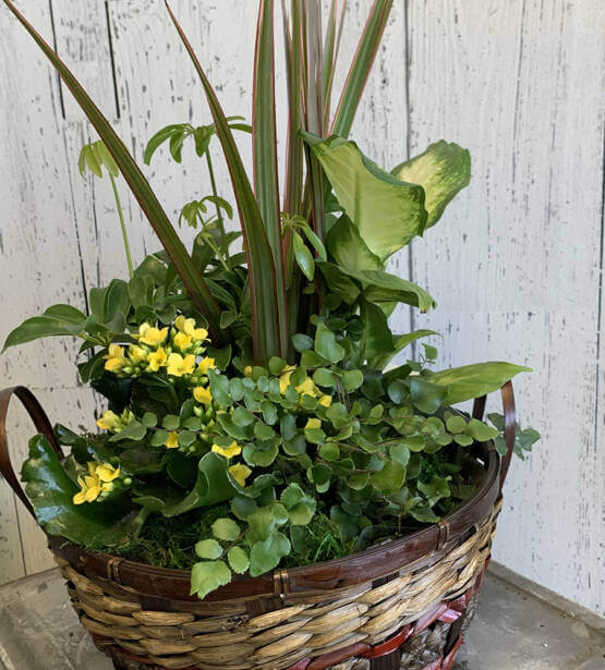an image of various plants planted in a brown basket