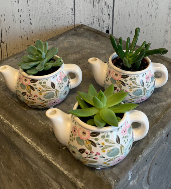an image of 3 succulents in teapots