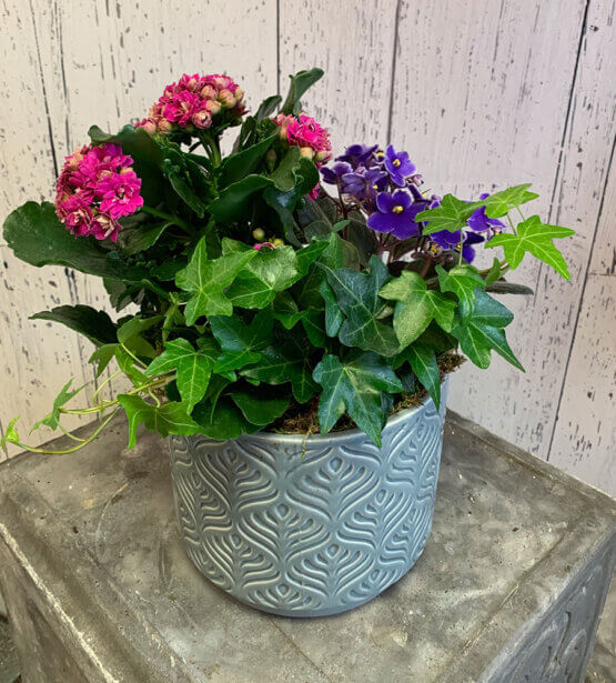 an image of pink and purple flowers in a pot