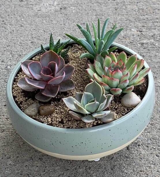 an image of 5 succulent plants in a white pot