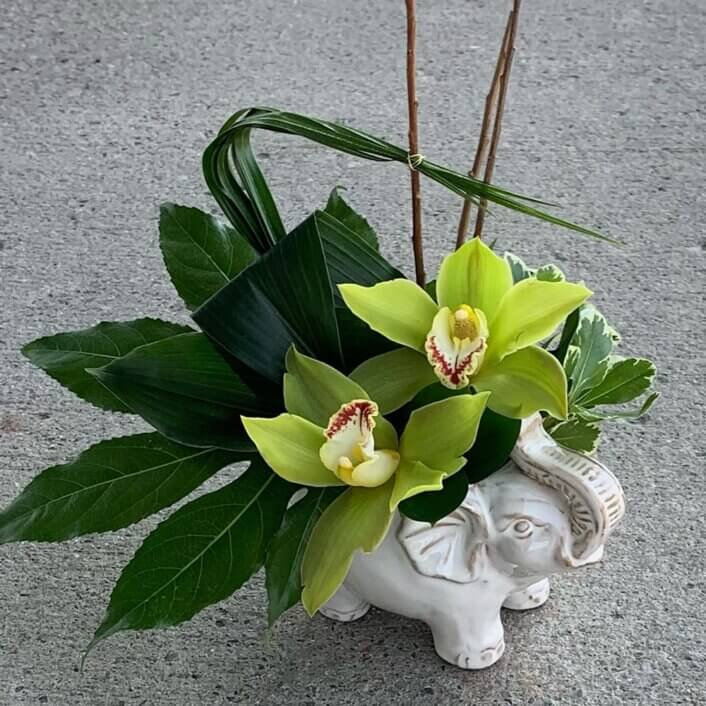 an image of orchids and greenery inside an elephant shaped ceramic vase.