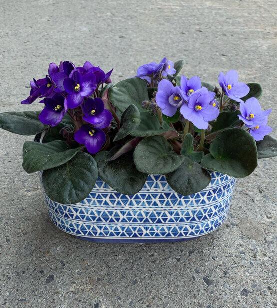 purple flowers in a decorative pot