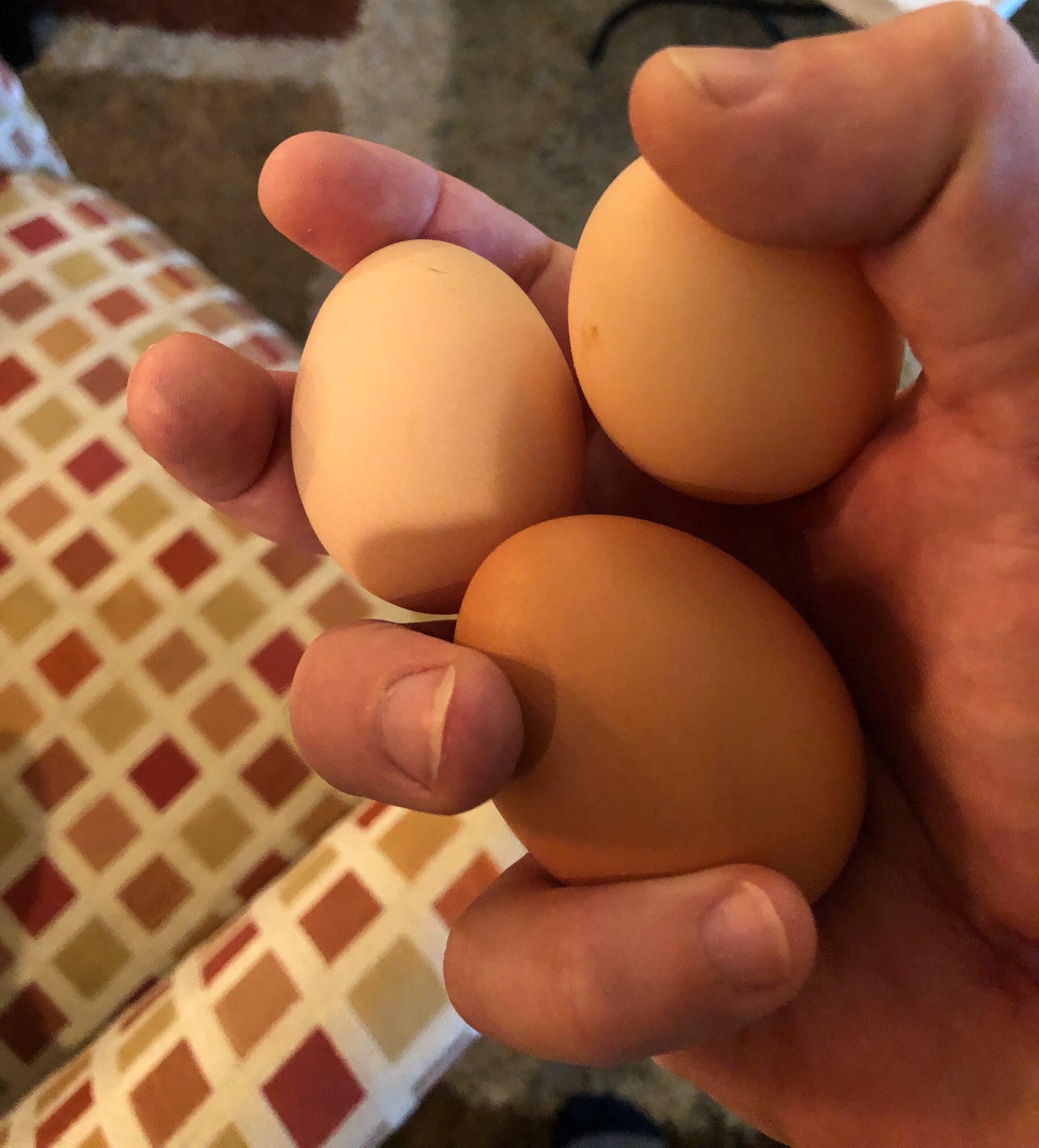 Eggs from Blue Dog Farm