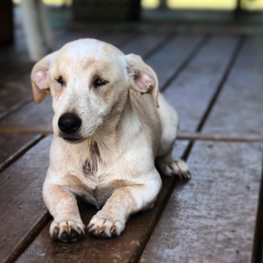 Remmi the Wonder Dog from Blue Dog Farm