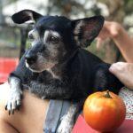 RIP-Gracie-The Blue Dog