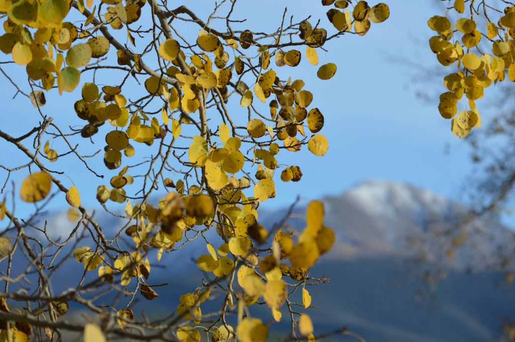 Property Insurance for Colorado