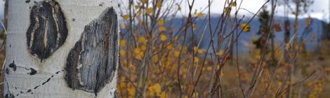 Aspen fall colorado