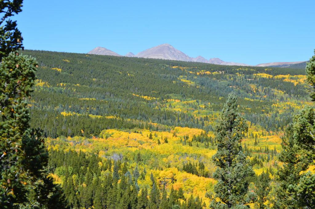 Product Liability Insurance for Colorado Marijuana Business
