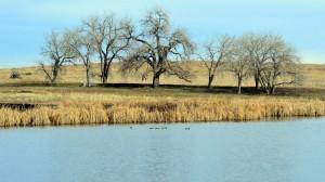 Lake and Oak Colorado
