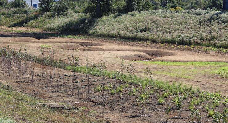 Mission Drive plantings