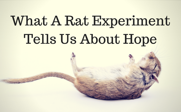 What A Rat Experiment Tells Us About Hope
