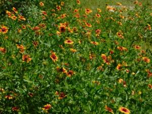 Rafter O Wildflowers
