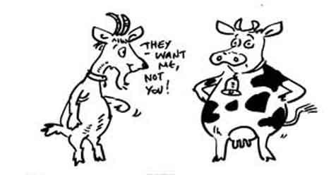 Goat Milk is better than cow milk
