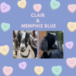 View Clair x Memphis Blue