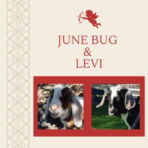June Bug x Levi