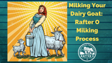 Milking Your Dairy Goat - Rafter O Milking Process - Mini Nubians