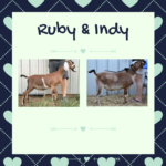 View Ruby x Indy