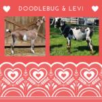 View Doodlebug x Levi