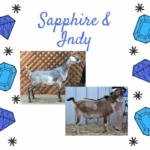 View Sapphire x Indy