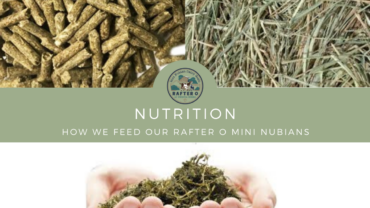 Nutrition - How we feed our Rafter O Mini Nubians