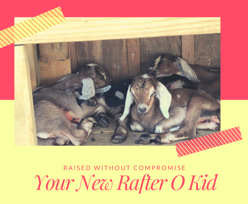Raised without Compromise - Your New Rafter O Kid