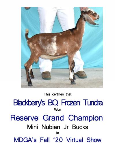Blackberry's BQ Frozen Tundra - Reserve Champion