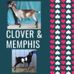 View 2021 Clover x Memphis