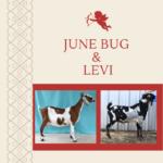 View 2021 June Bug x Levi
