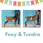 View 2021 Foxy x Tundra