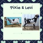 View 2021 Pixie x Levi