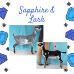 View 2021 Sapphire x Lark