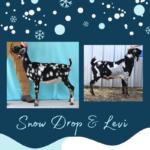 View 2021 Snow Drop x Levi