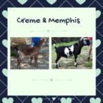 View 2022 Creme x Memphis