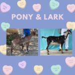 View 2022 Pony x Lark