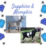 View 2022 Sapphire x Memphis Blue