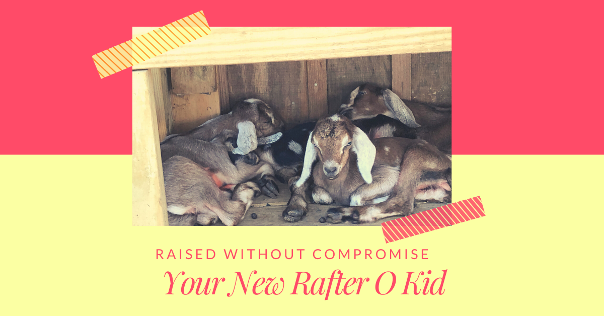 Blog: Your New Rafter O Kid